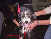 puppy graduate from Confident Canine puppy training
